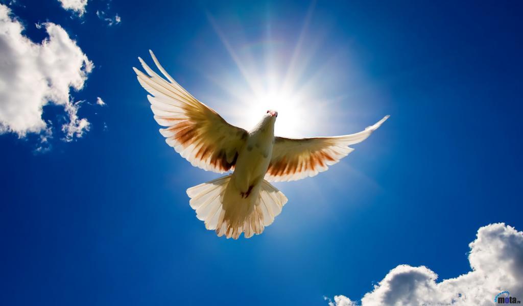Птица счастья с Соколиной горы.
