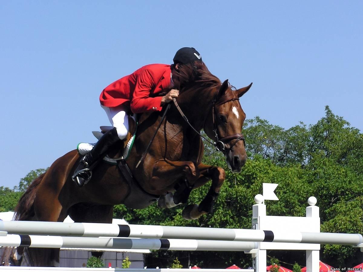 В Приморском (Большая Феодосия) состоится традиционный конный праздник «День коневода».