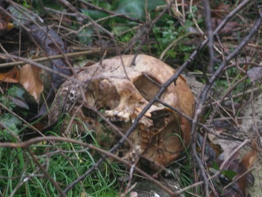 Милицию призвали расследовать разграбление могил на кладбище в Симферополе.