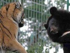 парк медведей и тигров