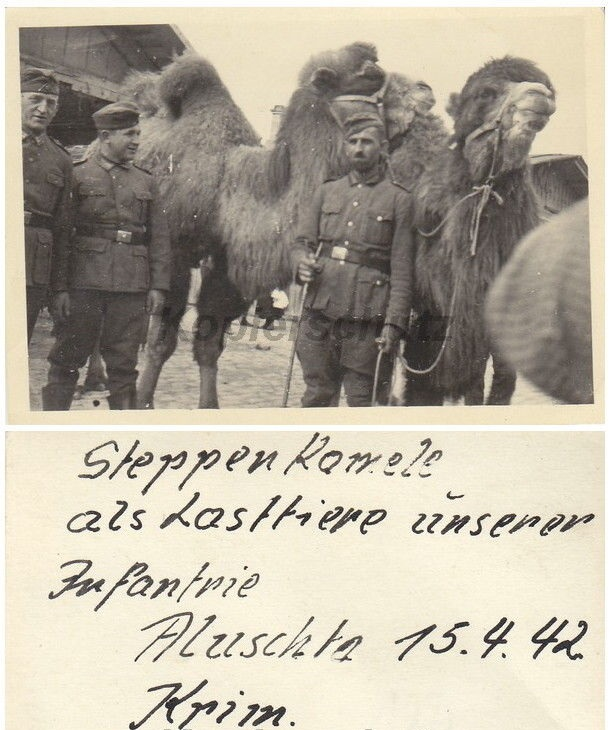 """Немецкие пехотинцы со """"степными"""" верблюдами"""
