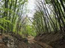 Крыму временно введен запрет на въезд в лес на автомобиле