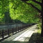 Мэр Симферополя намерен сделать столицу Крыма городом парковых зон