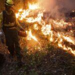 Пожарные в Крыму получили право тушить лесные пожары огнем