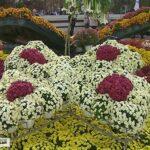 На «Балу хризантем» в Севастополе представили 28 сортов цветка