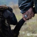 Курбан-байрам впервые объявлен выходным днем в Крыму