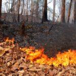 Население Крыма призвали не посещать леса из-за опасности пожаров