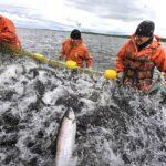 Рыбаки попросили зеленый коридор для продукции на переправе в Керчи