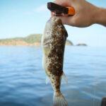 Ядовитых рыб фугу выловили из моря в Севастополе