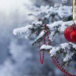 Крыму обещают помочь с новогодними елками
