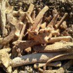 В Крыму строители раскопали древний курган и вероятную могилу Мамая (ФОТО)