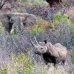 Зубков обещает привезти в Крым белого носорога и слонов