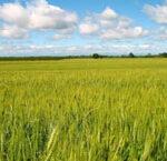 Крым получил 127 млн рублей на поддержку растениеводства