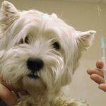 В Севастополе пройдёт вакцинация собак и кошек против бешенства