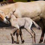 В симферопольском зооуголке родился жеребенок
