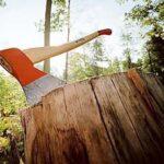 Власти Симферополя решили ввести порубочные билеты для рубки деревьев
