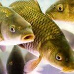В Крыму создали рыбопитомник, где будут выращивать рыбу, моллюсков и водоросли