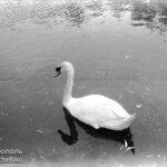Фотоподборка: Симферополь. Детский парк - живой уголок - конец 60-х