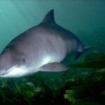 Ни один дельфинарий не захотел забрать выброшенного на берег на западе Крыма дельфина