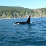 500 новых видов животных обнаружены в Охотском море