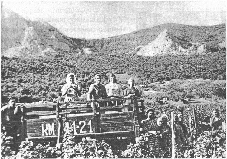 Сотрудники санатория на уборке винограда в поселке Форос