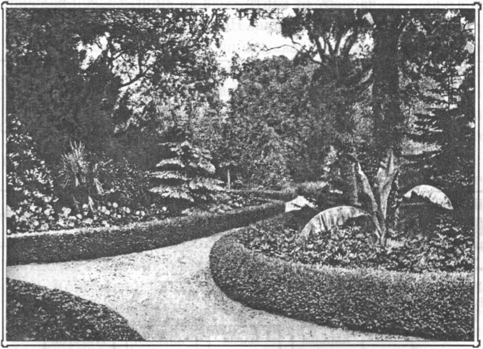 Парк. 1917 г.