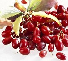 Кизил – Шайтанова ягода.