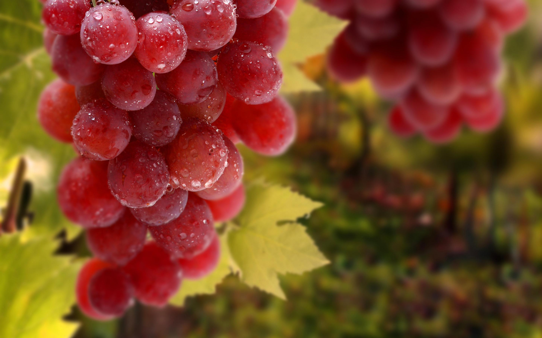 В Алуште пройдет фестиваль «Виноградные сезоны»