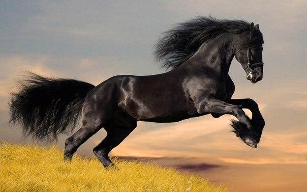Чудесный конь