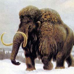 Крымской детворе покажут мамонта, кита и древнюю лошадь