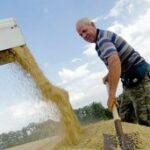 Крымские аграрии надеются собрать 25 центнеров зерновых с гектара
