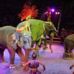 В Севастополе откроют цирк