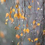 К концу недели в Крыму похолодает
