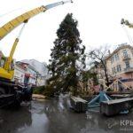 В Симферополе под дождем установили живую ель из Великого Устюга