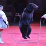 В Симферополь приехал с гастролями цирк Никулина