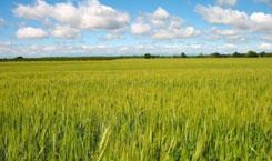 agrar-hitel-245-145