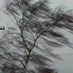 В выходные в Крыму прогнозируют шквальный ветер