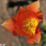 Никитский ботанический сад открыл выставку тюльпанов