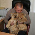 В Симферополе родились два львенка