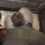 Руководство зоопарка «Сказка» и парка «Тайган» в Крыму допустило прекращение работы объектов