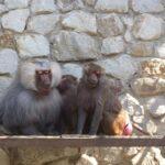 Дело о проверке в зоопарке «Сказка» в Ялте решили закрыть до конца недели