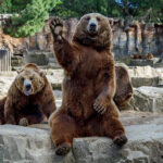 Создатель парка львов в Крыму решил создать парк медведей