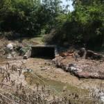 В Симферополе спилили 40 аварийных деревьев в русле Салгира (ФОТО)