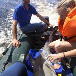 В Керчи в канале вблизи городского пляжа спасли дельфина-белобочку